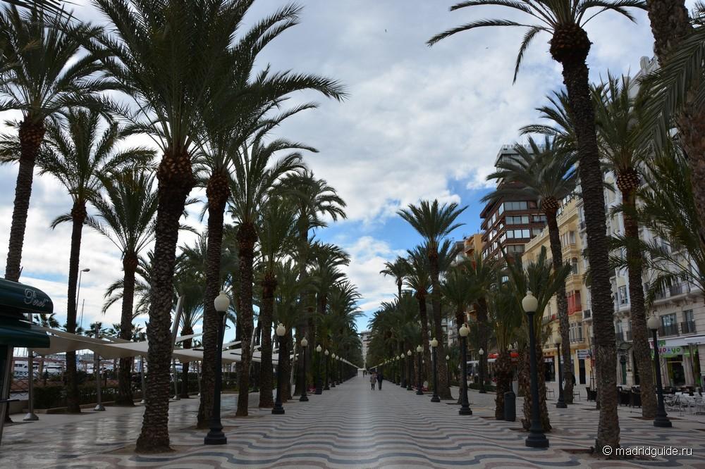 Пальмовая аллея в Аликанте, Explanada de España