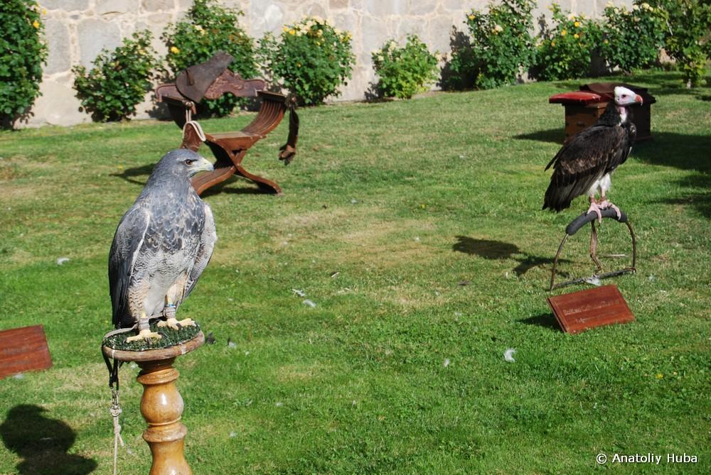 Средневековый праздник в Авиле, Соколиная охота